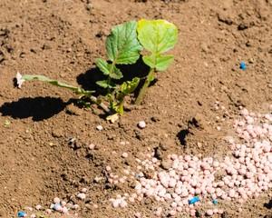 Slug Pellets on Ground