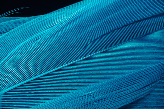 Beautiful Blue trends  feather pattern texture background. Macro photography view.