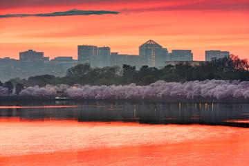 Fotomurales - Washington DC, USA Skyline on the River