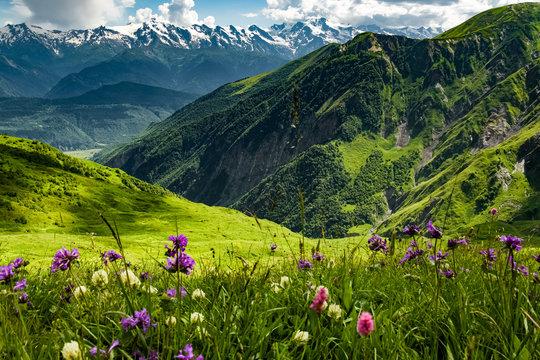 Green meadow in Georgia. Green Georgian meadow full of blooming wildflowers overlooking Caucasus Mountains. Beautiful Georgia landscape.