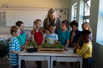 Female teacher around a box of plants for a nature study lesson in an elementary school classroom