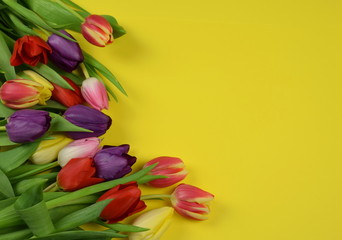 Springtime - Beginning of the year - Tulips on colored background