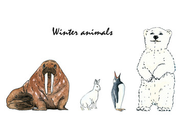 Set of animals- walrus, polar bear, rabbit and penguin. Hand drawing watercolor sketch on white background. Colorful illustration. Picture can be used in greeting cards, posters, flyers, banners, logo