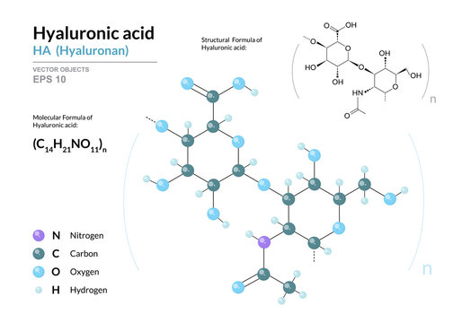 Hyaluronic acid. HA Hyaluronan. Structural chemical formula and molecule 3d model. Atoms with color coding. Vector illustration