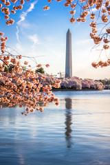 Wall Mural - Washington DC, USA at the tidal basin with Washington Monument in spring season.