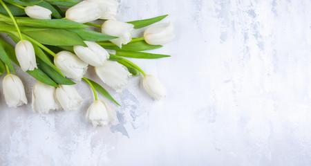 Fototapeta Beautiful white tulips flowers for holiday. obraz