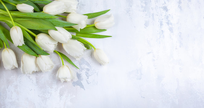 Beautiful white tulips flowers for holiday.