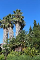 Mediterranean botanical garden - Olbius Riquier - Hyères - France