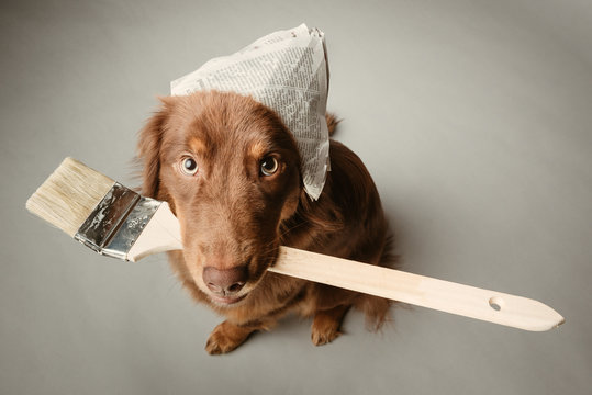 malender Hund mit Pinsel
