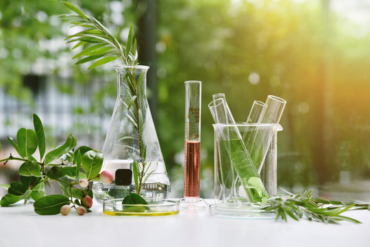 Natural drug research, Natural organic and scientific extraction in glassware, Alternative green herb medicine, Natural skin care beauty products, Laboratory and development concept.