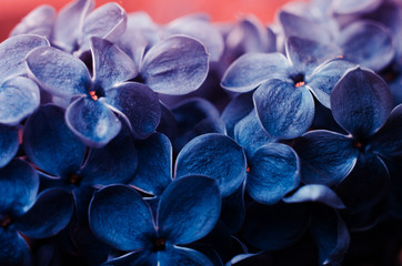 Wall Murals Lilac Close up flowers of lilac toned in Classic blue color.