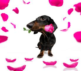 Deurstickers Crazy dog valentines love dog