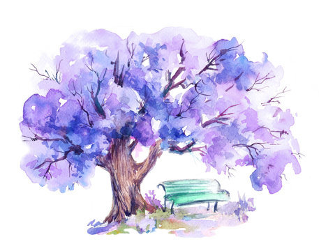 Blooming jacaranda trees,blue bench under tree in the park.Watercolor sketch.Hand drawn