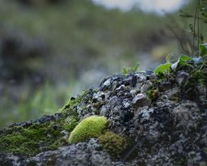 Foto op Canvas Khaki landscape with little part of the forest