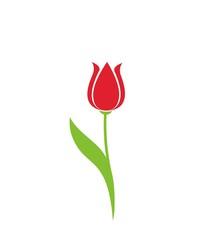 tulip flower vector image. spring floral element for design