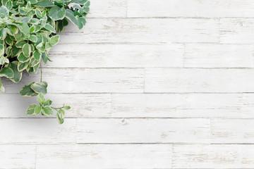 Foto auf Gartenposter Pflanzen 白い背景板と観葉植物・横