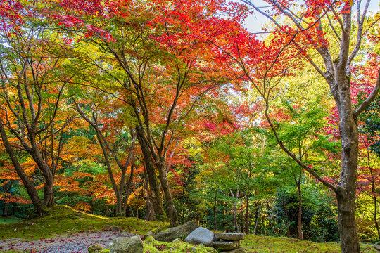 日本の秋 滋賀 湖東三山 西明寺65  Autumn in Japan, Shiga Prefecture, Koto-sanzan Saimyoji Temple #65