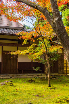 日本の秋 滋賀 湖東三山 西明寺72  Autumn in Japan, Shiga Prefecture, Koto-sanzan Saimyoji Temple #72
