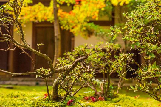 日本の秋 滋賀 湖東三山 西明寺74  Autumn in Japan, Shiga Prefecture, Koto-sanzan Saimyoji Temple #74