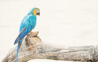 Watercolor Picture of Blue and Gold Macaw Perched on Branch