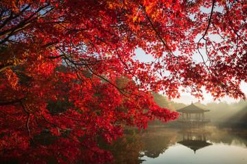 Türaufkleber Violett rot イロハモミジの紅葉と浮見堂に差す光芒