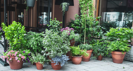 Many beautiful potted plants outside a street cafe