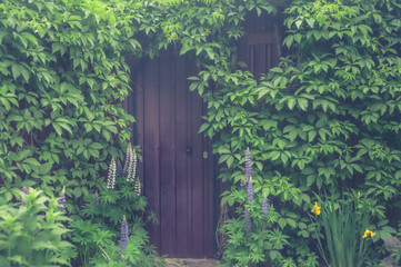 Beautiful entrance  in a brick wall covered with green vines and flowers