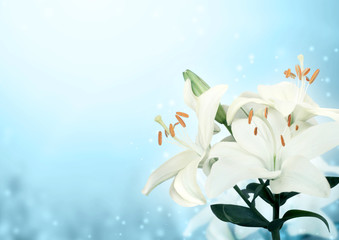 Fototapete - Beautiful magic spring scene with white lily flowers