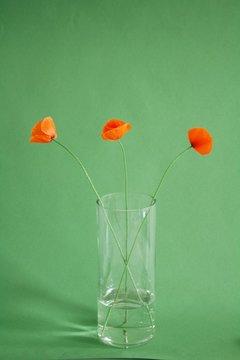 Red poppies still life2