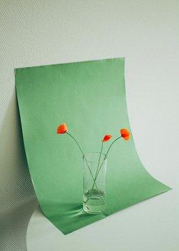 Red poppies still life1