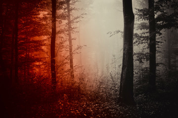 dark horror forest, scary landscape, dark woods Wall mural
