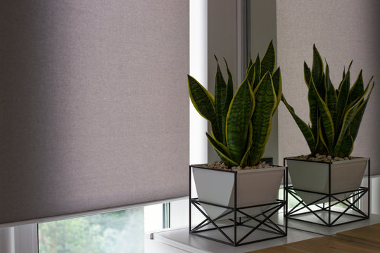 Automatic roller blinds on the window. A houseplant in a modern pot stands on the bedside wooden table next to an automatic roller shades. Motorized roller blinds are made from texture material.
