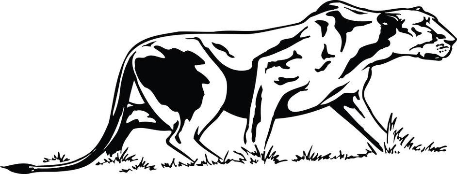 Lioness Stalking Vector Illustration