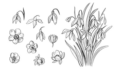Set of outline spring flowers and plants. Decorative floral elements for design. Black outline with transparent background