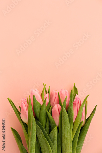 Fresh flower composition, bouquet of bi color tulips, pale pink and white gradient background. International Women's day, mother's day greeting concept. Copy space, close up, top view, flat lay.