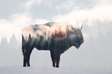 Canvas Prints Bison Wild bison