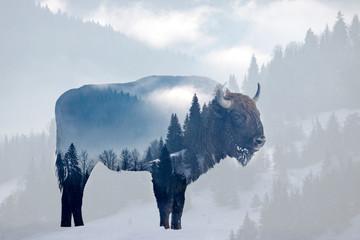 In de dag Bison Wild bison