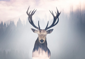 Foto op Plexiglas Hert Red deer and the misty forest