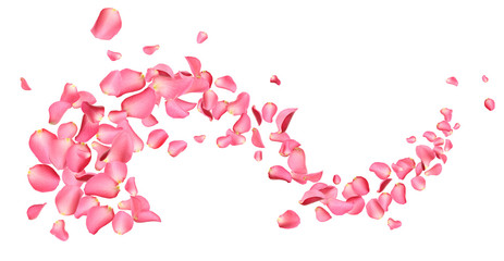 Poster Roses Flying fresh pink rose petals on white background