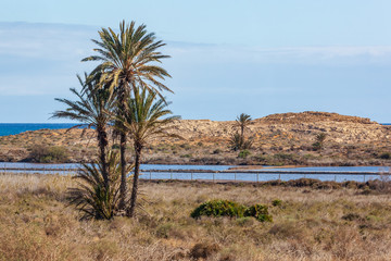 Picturesque palm trees against the background of salty lakes on the coast of the Mediterranean Sea in the Calblanque Regional natural Park, Murcia, Spain