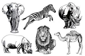 Graphical set of African animals isolated on white background,jpg illustration