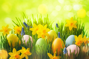Zelfklevend Fotobehang Narcis Spring background with Easter eggs in green grass and daffodil flowers.