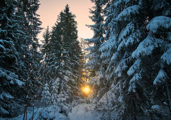 The Sun and Winter Trees