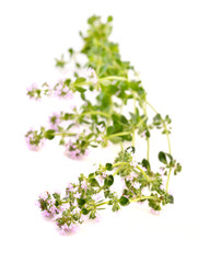 Thyme branch isolated on white. Thymus vulgaris with pink flowers.
