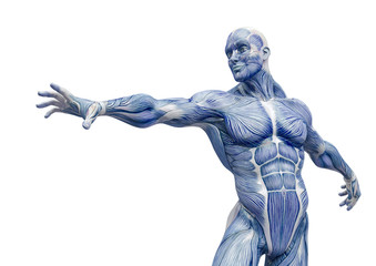 muscleman anatomy heroic body is trying to reach in white background