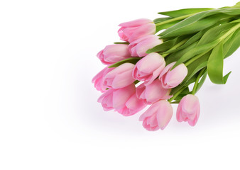 pink tulip flowers isolated on white