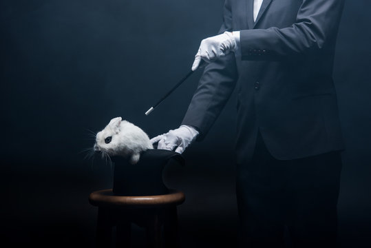cropped view of magician showing trick with wand and white rabbit in hat, in dark room with smoke