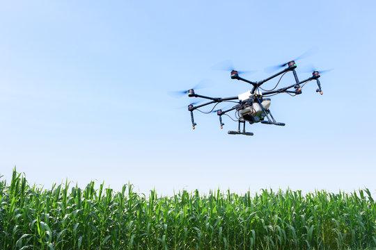 Smart farm use drone flying  spray on blue sky in the corn fields