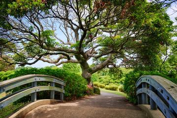 beautiful tree in Japanese garden