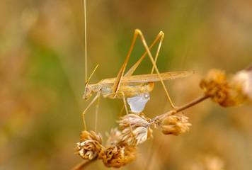 Foto op Canvas Vlinder Beautiful Grasshopper macro in green nature